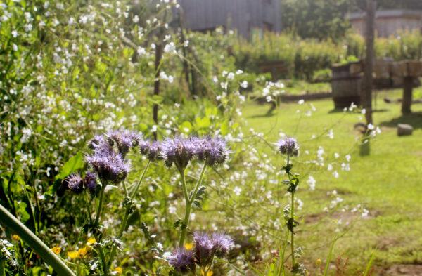 COVID-19 : Réouverture du Parc en juin à prix libre