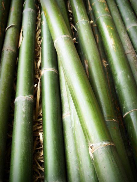 Cherche perches de Bambous & Toile PVC pour construire une Flex Yourte !